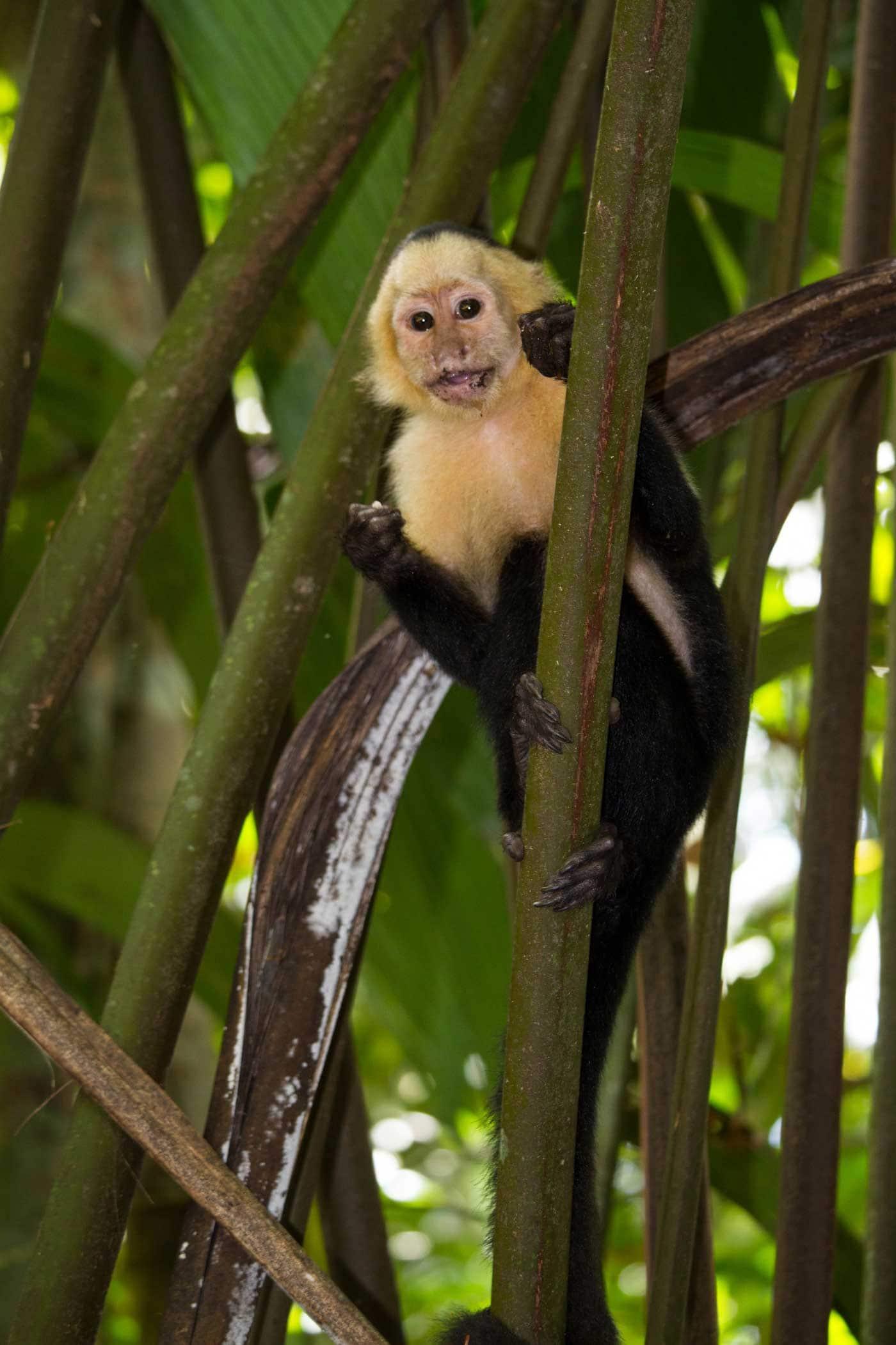 Costa Rica Tortugero