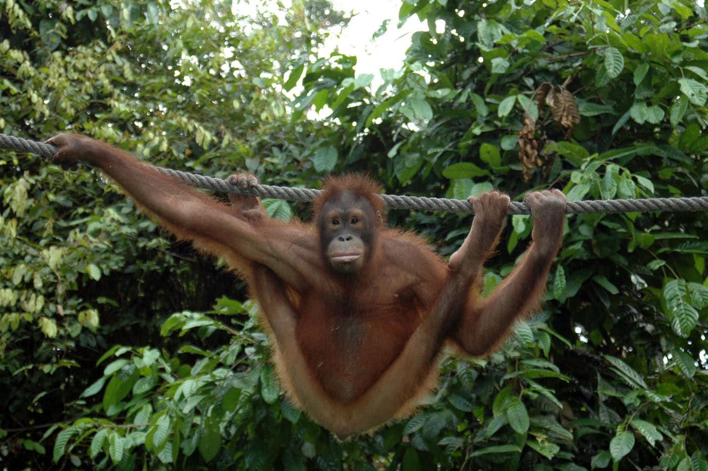 Malaysia Borneo Animals