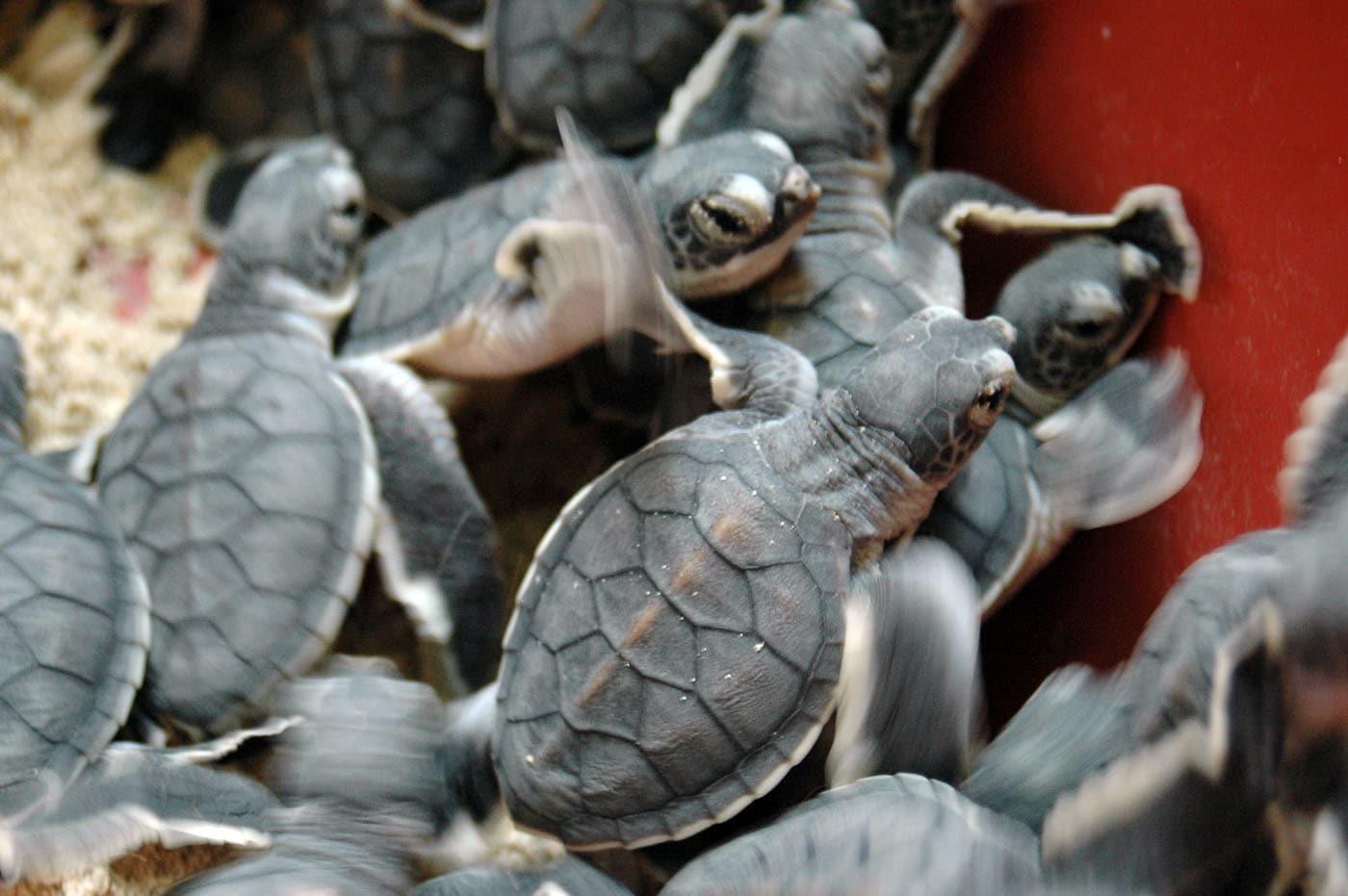 Malaysia Borneo Lankayan Marine Animals