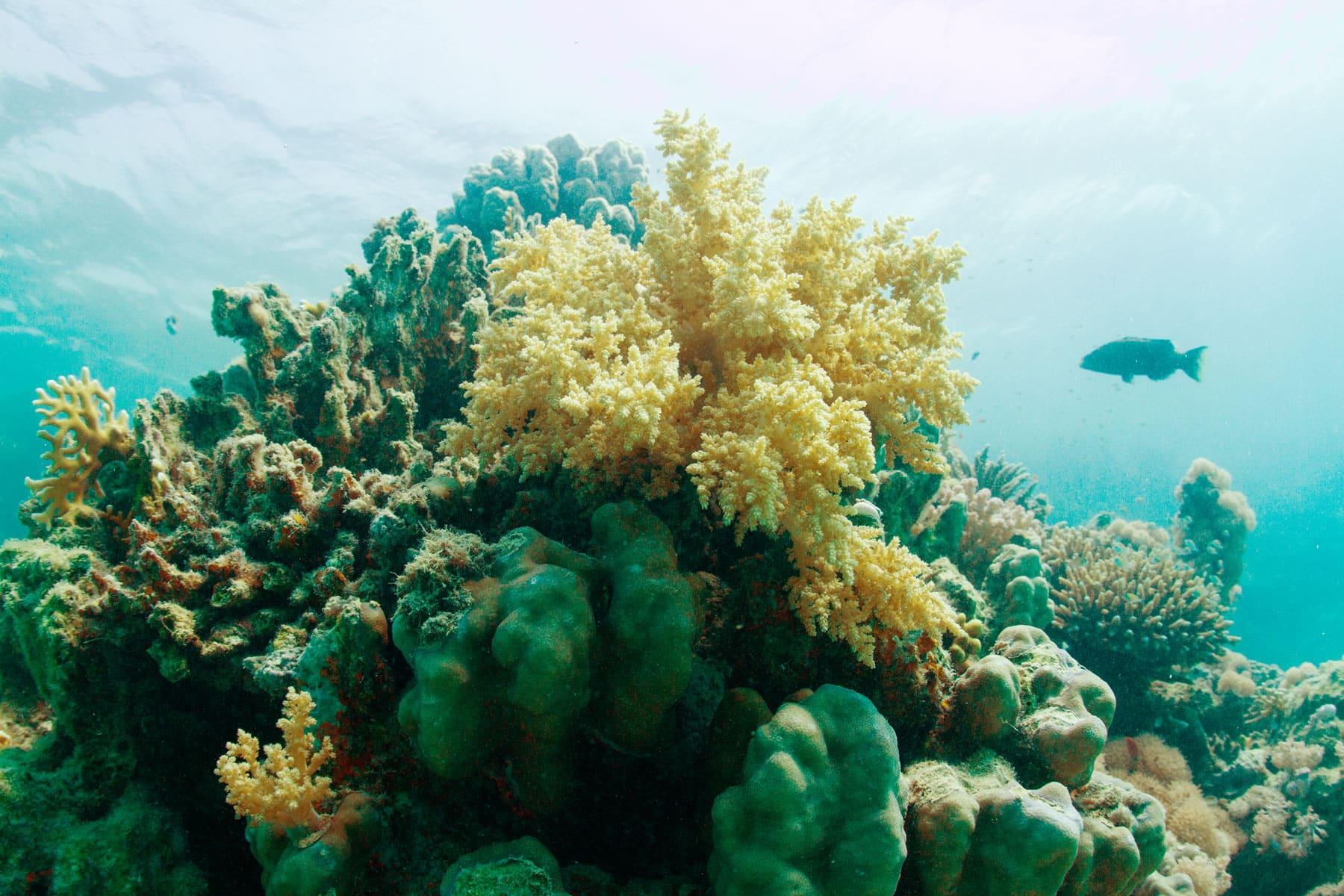 Egypt Underwater Life