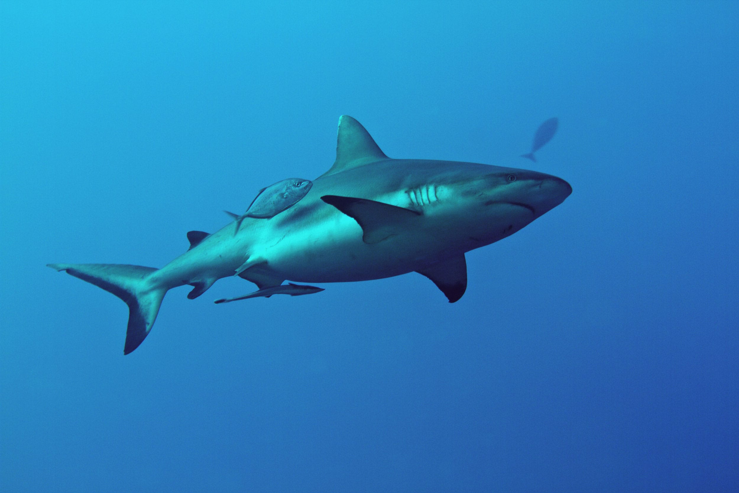 Sudan Underwater Life