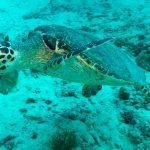 Maldives Underwater Life