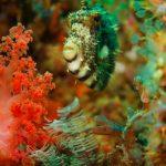 Philippines Underwater Life